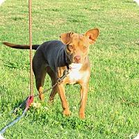 Adopt A Pet :: HONEY - Bedminster, NJ