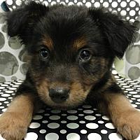 Adopt A Pet :: ART - Tampa, FL