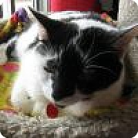 Adopt A Pet :: Liberty - Powell, OH