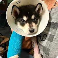 Adopt A Pet :: Bono - Irvine, CA