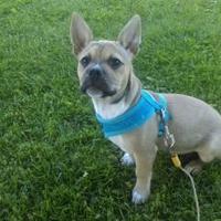 Adopt A Pet :: Pending Adoption DIESEL - Greensboro, NC