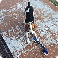Adopt A Pet :: Texas - Hartville, WY