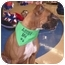Photo 1 - Boxer Dog for adoption in Turnersville, New Jersey - Bella