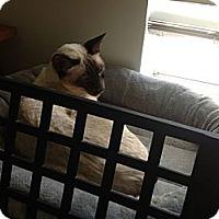 Adopt A Pet :: chester - Laguna Woods, CA