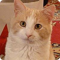 Adopt A Pet :: Cam - Bedford, MA