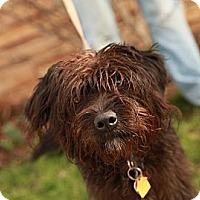 Adopt A Pet :: Snuggles - Lancaster, OH