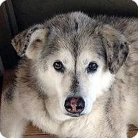 Adopt A Pet :: THELMA-Adoption Pending - Boise, ID