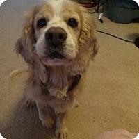 Adopt A Pet :: Winston - Richmond, VA