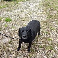 Adopt A Pet :: Julia - Holden, MO
