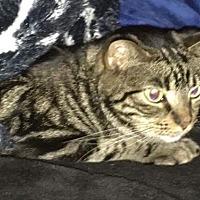 Adopt A Pet :: Marley - Palatine, IL