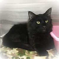 Adopt A Pet :: Thailand - Webster, MA