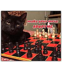 Domestic Shorthair Kitten for adoption in oxford, New Jersey - Batman