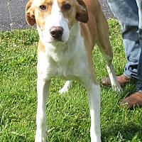 Adopt A Pet :: Boomer - Reeds Spring, MO