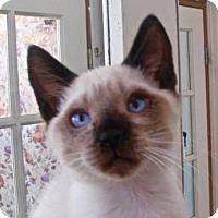 Adopt A Pet :: Harold - Davis, CA