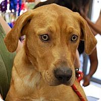 Adopt A Pet :: Cali - Brooklyn, NY