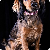 Adopt A Pet :: Princess - Lodi, CA
