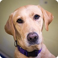 Adopt A Pet :: Sammy - St. Petersburg, FL