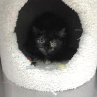 Adopt A Pet :: Ash - Lufkin, TX