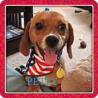Adopt A Pet :: PETEY - Ventnor City, NJ