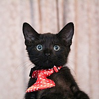 Adopt A Pet :: Bagheera - Los Angeles, CA