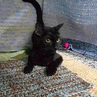 Adopt A Pet :: GIA - Winter Haven, FL