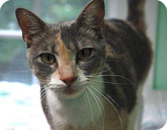 Domestic Shorthair Cat for adoption in Lunenburg, Massachusetts - Ramona