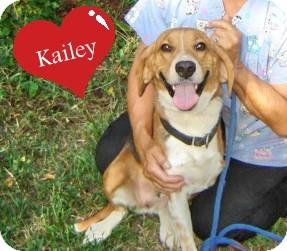 Foxhound Dog for adoption in Franklinton, North Carolina - Kailey
