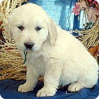 Retriever (Unknown Type)/Shepherd (Unknown Type) Mix Dog for adoption in Mechanicsburg, Pennsylvania - Pre-Approval