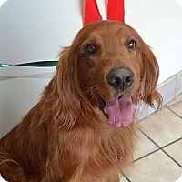 Adopt A Pet :: Kipper - Danbury, CT