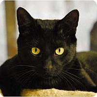 Adopt A Pet :: Sharper - Lunenburg, MA