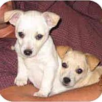 Adopt A Pet :: RASCAL - Pembroke Pines, FL