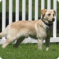 Adopt A Pet :: Gina - New Canaan, CT