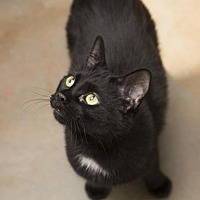 Adopt A Pet :: Squeaker - Denver, CO