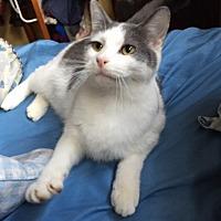 Adopt A Pet :: Collin - Sedalia, MO
