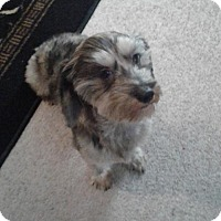 Adopt A Pet :: Geo - Nashville, TN