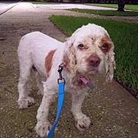 Adopt A Pet :: Emily - Cape Coral, FL