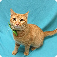 Adopt A Pet :: WASABI - Lexington, NC