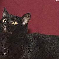 Adopt A Pet :: Emperor - Medina, OH
