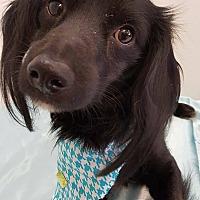 Adopt A Pet :: Jack - Lakeland, FL