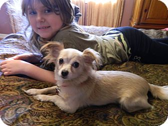 Chihuahua Mix Dog for adoption in West Deptford, New Jersey - Abby