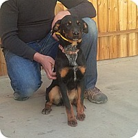 Adopt A Pet :: Some kind of Wonderful - Lucerne Valley, CA