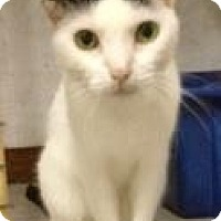 Adopt A Pet :: Mimi - St. James City, FL