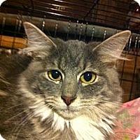 Adopt A Pet :: Lily - Santa Monica, CA