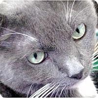 Adopt A Pet :: Cashmere - Deerfield Beach, FL