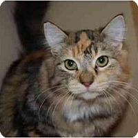 Adopt A Pet :: Meeps - Modesto, CA