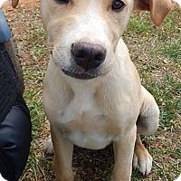 Adopt A Pet :: Bacon (30 lb) - SUSSEX, NJ