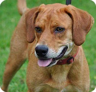 Hound (Unknown Type) Mix Dog for adoption in Gainesville, Florida - Duke