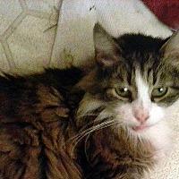 Adopt A Pet :: Scrappy - Durham, NC