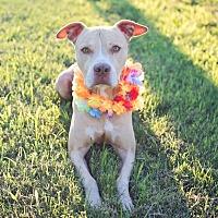 Adopt A Pet :: Heston - Houston, TX