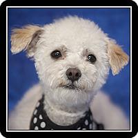 Adopt A Pet :: Carmela - San Diego, CA
